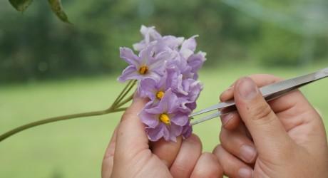 EU-landen maken potje van regels voor biologisch boeren